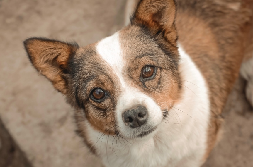Puppy Update: Martha