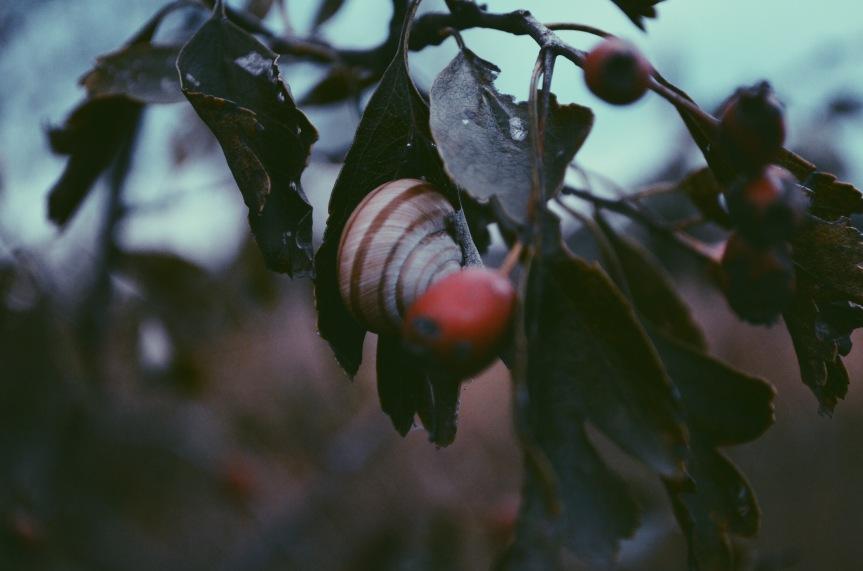 In the same breath | Apoem